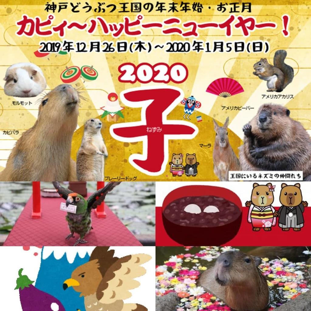 お正月イベント 神戸どうぶつ王国